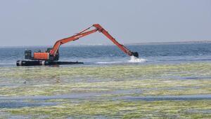 Temizliği süren deniz marulundaki beyazlaşma için açıklama geldi
