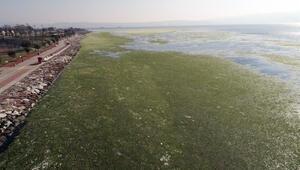 İzmir Körfezi'ndeki ürküten görüntüde son durum