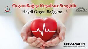 Tolay: 18 yaş üstündeki herkes organ bağışı belgesi alabilir
