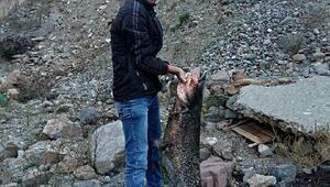 Çoruhta yakaladığı 1 metre 80 santimlik balıkla fotoğraf çektirdi
