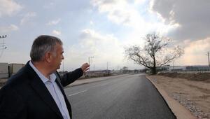 270 yıllık çınar ağacının zarar görmemesi için yol projesi değişti