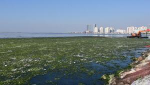 İzmirde suyun yüzeyini kaplayan deniz marulu temizlendi