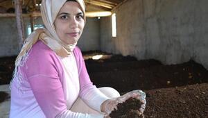 Hobi amaçlı başladı, şimdi4 milyon solucanla gübre üretiyor