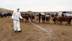 Vanda, salgın hastalıklarına karşı hayvan pazarında ilaçlama yapıldı