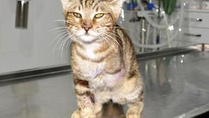 Patisi ampute edilen kedi, yaralı bulan turistle Almanyaya gidecek