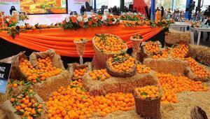 Seferihisarda satsuma mandalina hasat edilecek
