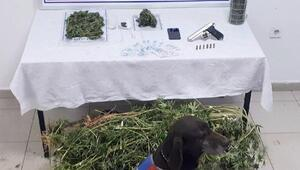 Bursada jandarmadan uyuşturucu operasyonu: 1 kişi tutuklandı