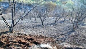 Manavgatta yangının bilançosu gün ağarınca ortaya çıktı
