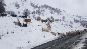 Tuncelinin 49 köy yolu, kar nedeniyle ulaşıma kapandı
