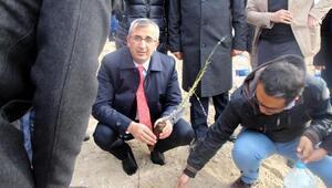 Kırıkkale Valisi lavanta fidanı dikti
