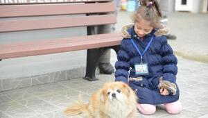 Başkan Edebali: Sokak hayvanları bizden şefkat bekliyor
