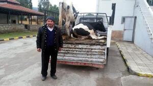 Çaldığı 2 ineği 3 bin liraya satmış