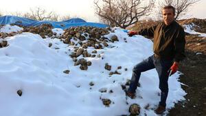 Kar altında kalan şeker pancarı çürümeye terk edildi
