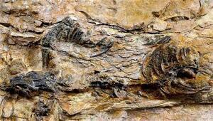Güney Korede dünyanın en küçük dinozor ayak izleri bulundu