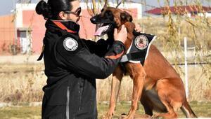 Van emniyetinin hassas burunlu köpekleri Türkiye rekoru kırdı
