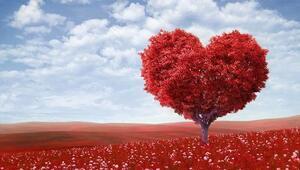 Sevgililer Günü ne zaman Sevgililer Günü neden kutlanır