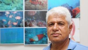 Akdenizi işgal eden balık türü 63e çıktı