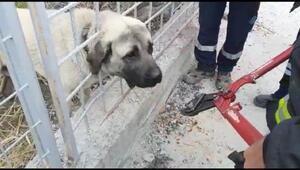 Demir korkuluğa başı sıkışan köpeği itfaiye ekibi kurtardı