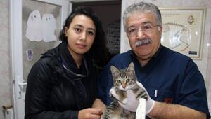 Üniversite öğrencisi yaralı kediyi veterinere götürüp sahiplendi