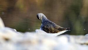 Kuş gözlemcisi Prof. Dr. Kılıç: Bilimsel yaban hayatı kitapları güncellenmeli