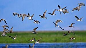 Sultan Sazlığına göç eden kuşlar için can suyu takviyesi yapılıyor