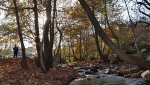 İdilli Vadisinde, sonbahar güzelliği
