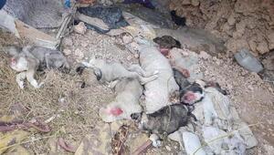 Telef olan yavru köpeklere nekropsi yapılacak