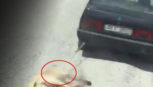 Köpeğe işkenceye ibretlik ceza