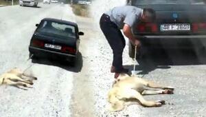 Köpeği otomobile bağlayıp sürükleyen sürücüye bir ceza daha