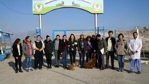 ODTÜ'lü öğrenciler sokak hayvanları için ürün tasarlayacak