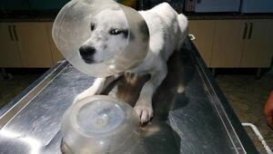 Sokak köpeği başındaki bidondan kurtuldu - Ek fotoğraflar