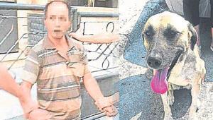 Sokak köpeği sapığı yakalattı 10 yaşındaki çocuğu...