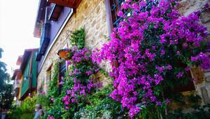 Avrupanın çiçeği Antalyadan