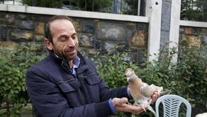 350 güvercin '2'nci İstanbul Güvercin Festivali'nde görücüye çıktı