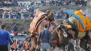 5inci Deve Güreşi Festivalinin geliri Koçarlı Belediyespora