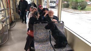 Sokak köpeği, duraktan tramvaya bindi