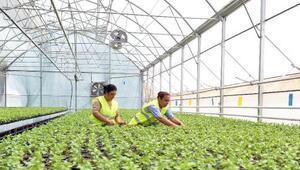 Muratpaşa seralarında 2 milyon 743 bin çiçek üretildi
