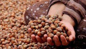 Türkiye 3 ayda 90 bin ton fındık ihraç etti