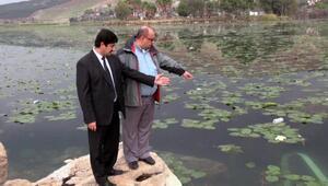 Nilüfer çiçekli Gölbaşı Gölü, temizlenecek