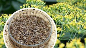 Rezene çayı nasıl demlenir Rezene çayının faydaları neler