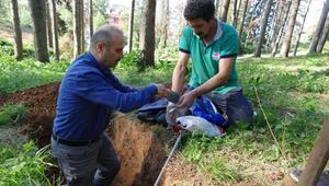 Atatürk Köşkü Ormanlarında böcek istilasıyla kuruyan 456 ağaç kesilecek