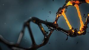 Kanser hücrelerinin DNAları altının çekim gücüne kapılıyor