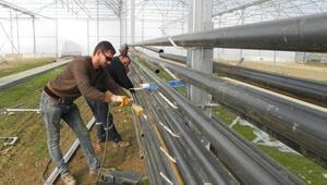 Ödemiş Dış Mekan Süs Bitkileri Genç Fide Üretim Tesisinde sona gelindi