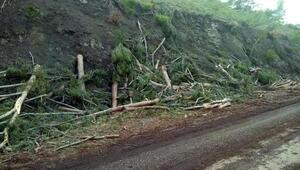 Bakanlık onaylı ağaç kesimi
