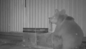Arıcı başkan, yolda rastladığı ayılara bal verdi