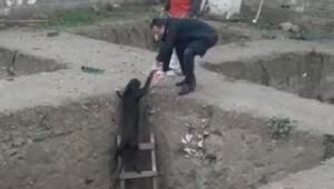 İnşaat çukuruna düşen köpeği esnaf kurtardı