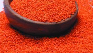 Yağlı tohumlar ve mamulleri ihracatında artış