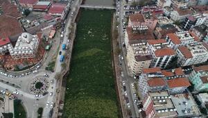 Asi Nehri, su sümbüllerinden temizleniyor