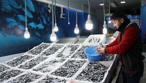 Hamsi ve çinekop en çok satılan balık