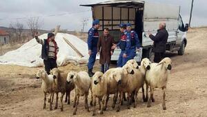 Koyun hırsızları tutuklandı, hayvanlar sahibine teslim edildi
